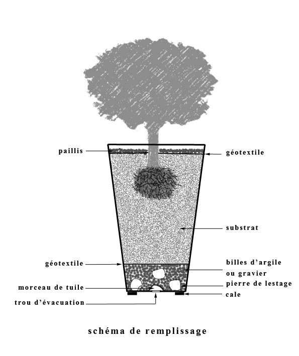 conseils plantation