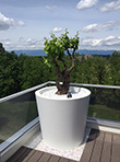 Pot de fleurs conique large mis en situation