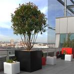 Bacs à plantes cubiques sur la terrasse d'une société