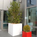 Bacs à plantes carré sur la terrasse d'une société