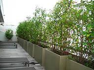 Bacs à plantes pour former un brise-vue