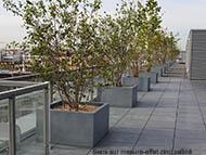 Bacs cubiques sur terrasse