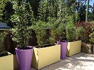 Bacs à plantes coniques et jardinières